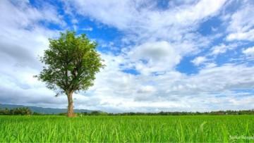 Inscriben a Curso de Formación Ambiental para estudiantes