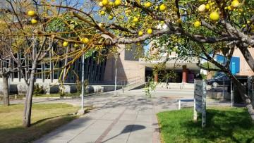 Consejo Superior de la UNCuyo solicitó tratamiento urgente del proyecto de Ley de Ejercicio Profesional para egresados de la Facultad de Educación
